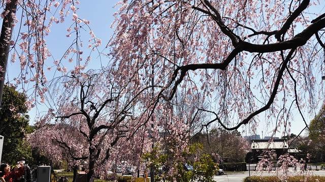 春季皇居乾通り一般公開